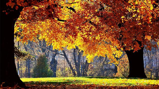 Dikke bomen met herfstbladeren in het park