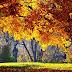 Herfst achtergronden en foto's