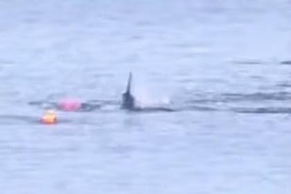 Saat-saat Mengerikan Kayaker Diserang Hiu Putih