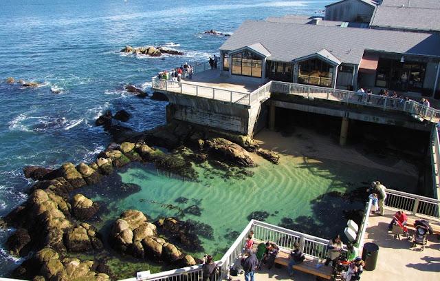 Vida marinha em Monterey