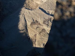 Sunlight shining on fossil plant