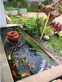 cara praktis membuat kolam ikan minimalis