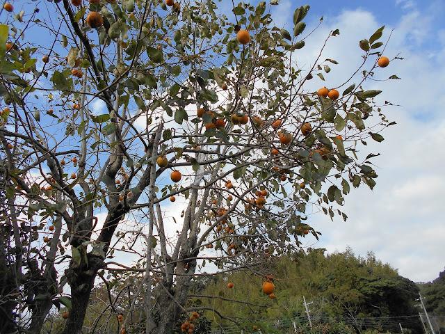 渋柿と秋の空