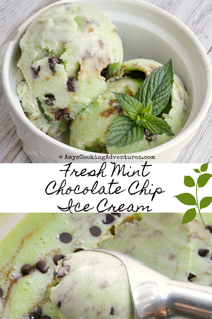 Amy's Cooking Adventures: Fresh Mint Chocolate Chip Ice Cream