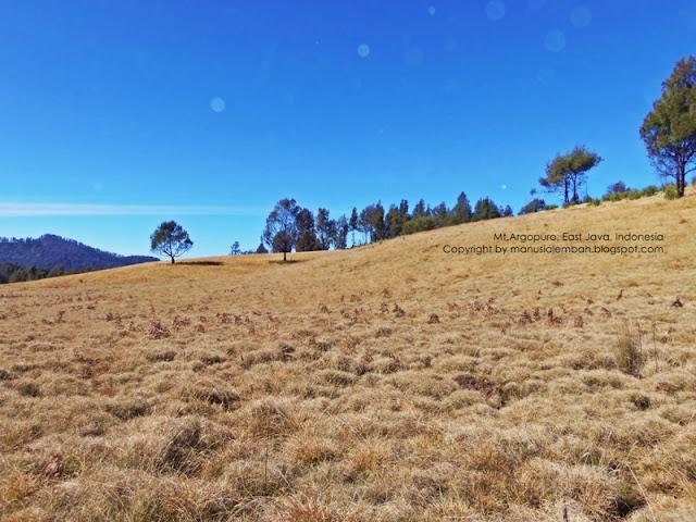savana gunung argopuro
