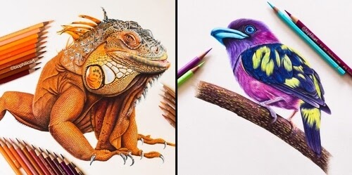 00-Sallyann-Brightly-Colored-Animal-Pencil-Drawings-www-designstack-co