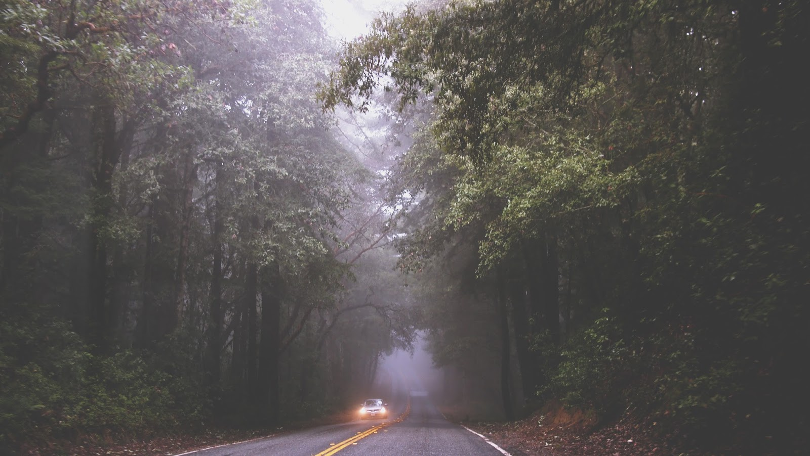 Car driving on a deserted road through a forest