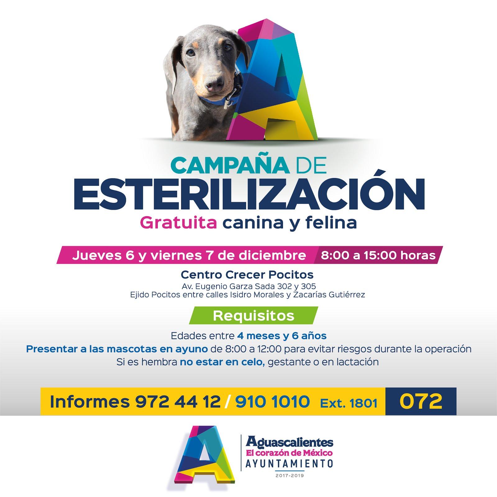 ... tienen como principal propósito evitar la sobrepoblación canina y  felina en condición de calle 6c98e3f90d1
