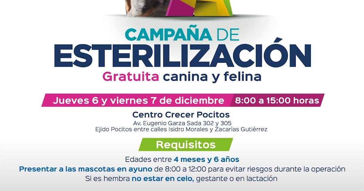 Campaña de Esterilización Gratuita a Mascotas en el Municipio de  Aguascalientes  472a96b94a4