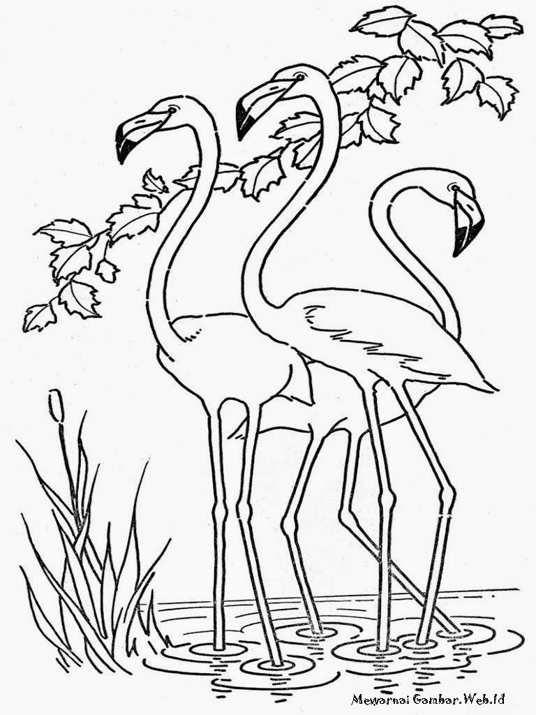 Kumpulan Gambar Sketsa Burung Yang Cantik