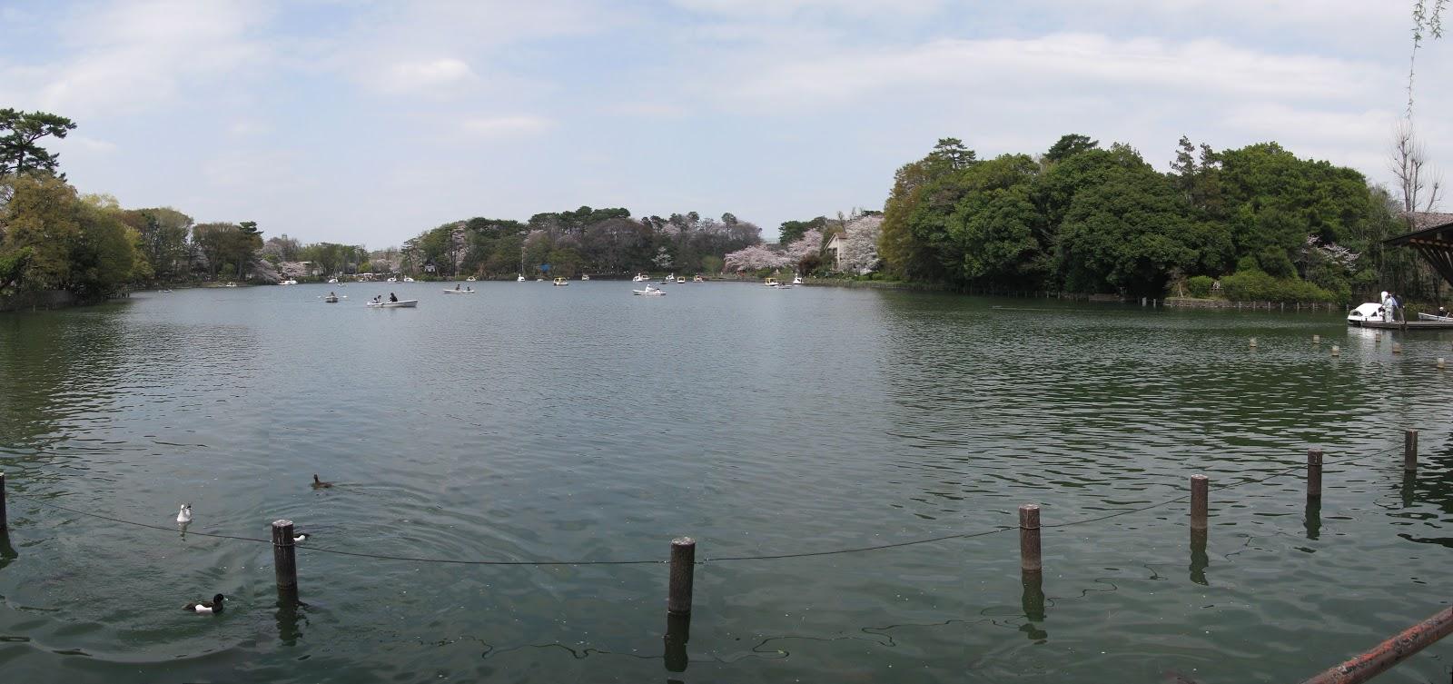 洗足池公園:スワンボートが浮かんだ広々とした池