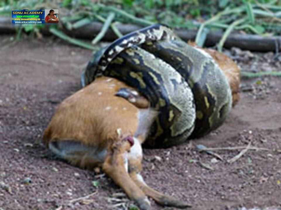Sonu Academy A Snake Charmer S Story Text
