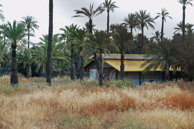 Palmeral d'Elche - Elche palm groves