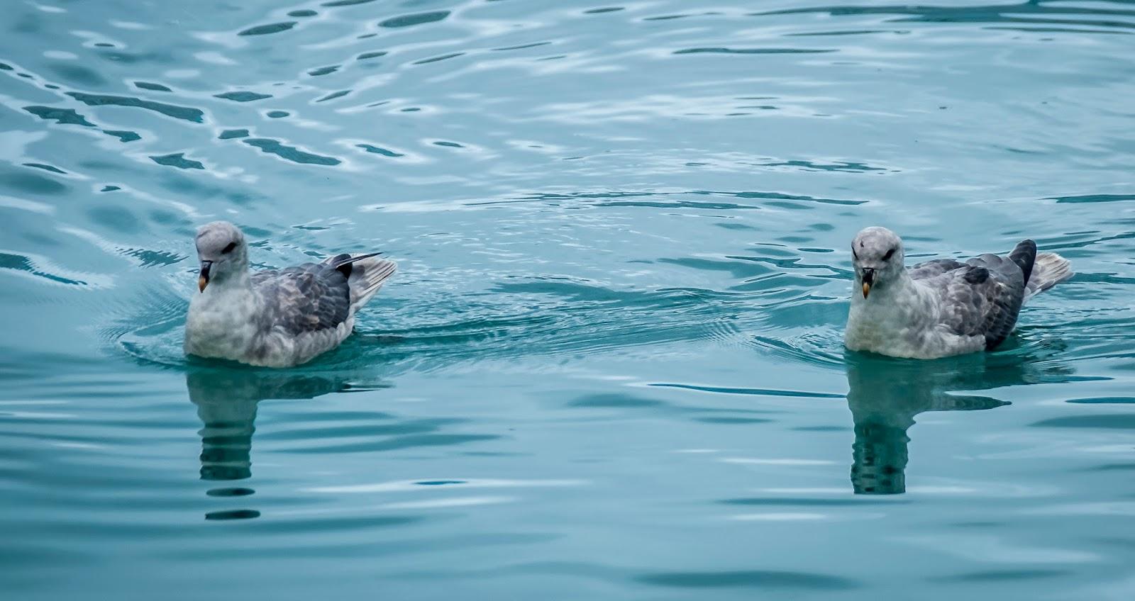 oiseau faune svalbard spitzberg