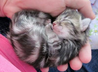 Küçük-kedi
