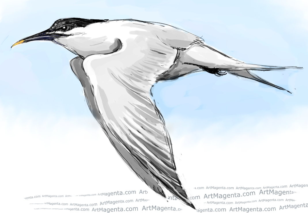 Sandwich Tern sketch painting. Bird art drawing by illustrator Artmagenta