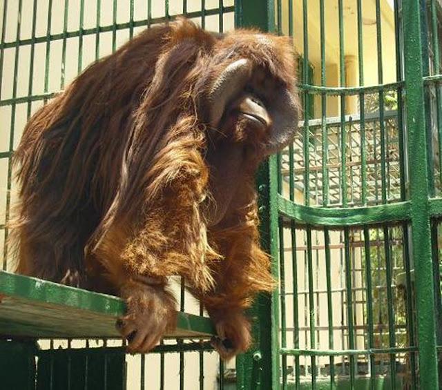 الحيوانات في حديقة الحيوان بالجيزة Giza Zoo Animals
