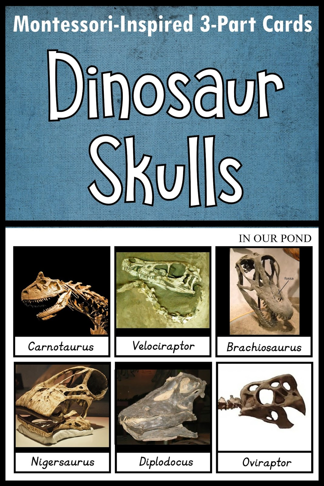 In Our Pond Montessori Inspired Dinosaur Skulls Matching Cards