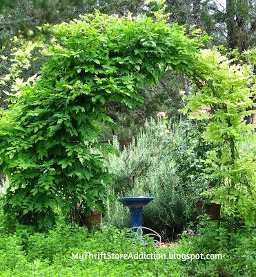 Secret Garden Herbs