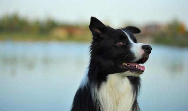 Chú chó sợ mọi âm thanh trong cuộc sống