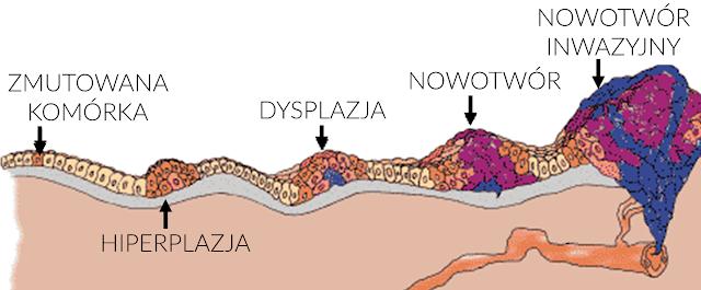 ewolucja nowotworu