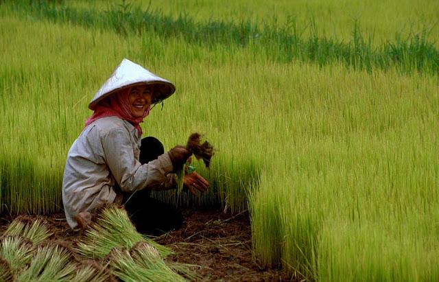 Top 10 các bài thơ hay về người nông dân & nỗi lòng của họ