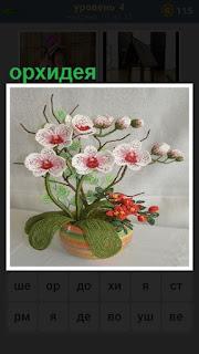 Растет и распустилась орхидея в вазе с зелеными листьями