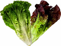 Lettuce Nutrition & Health Benefits