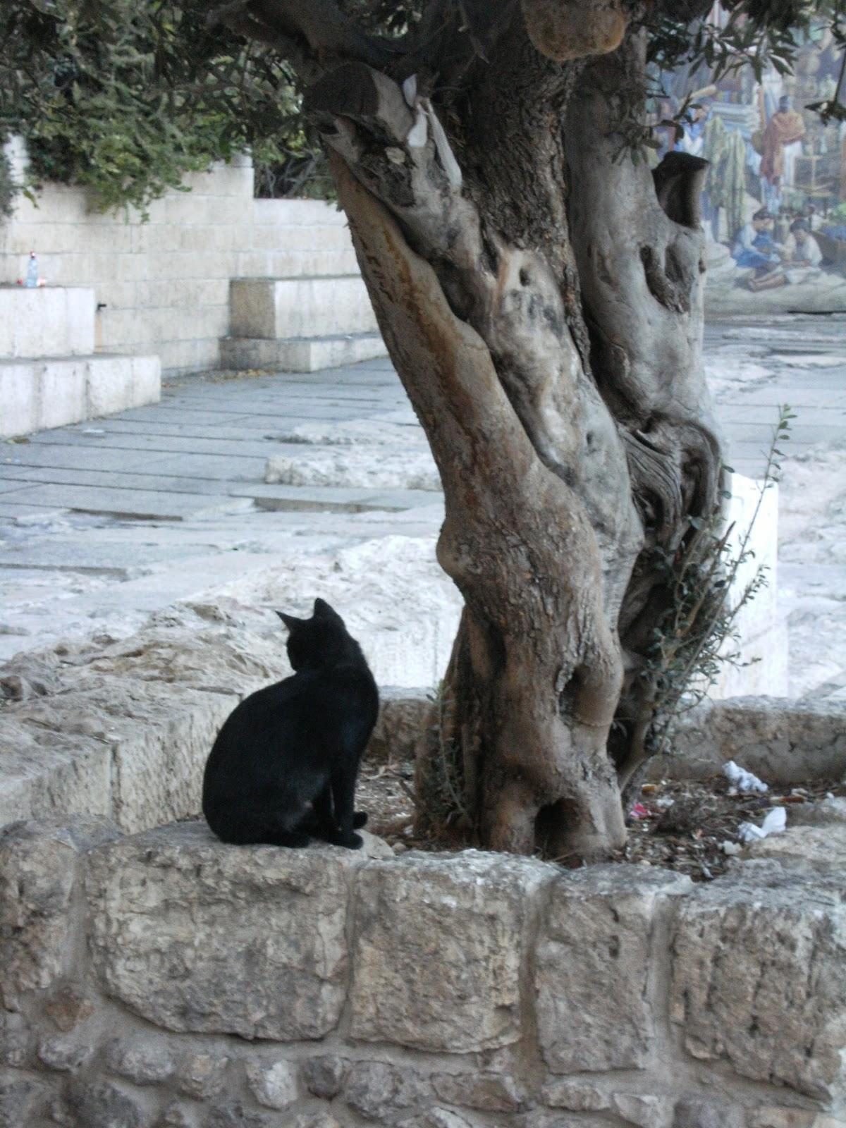 экскурсовод в Израиле, в Иерусалиме,  гид по Иерусалиму, по Израилю, фрилансер, авторская экскурсия по Иерусалиму,