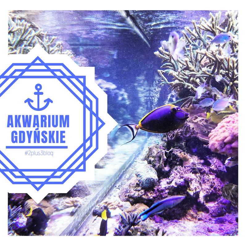 Relacja Akwarium Gdyńskie 2plus3blog