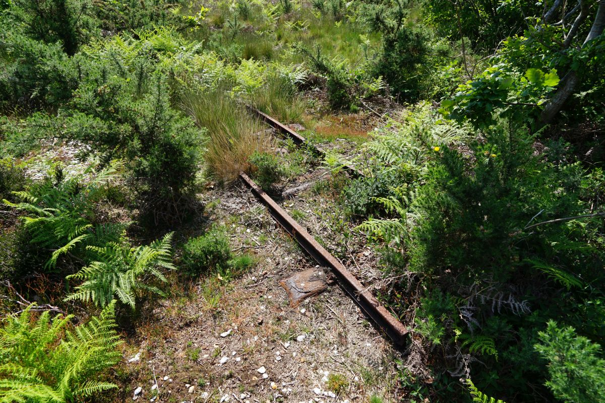 Narrow Gauge in the Browndown undergrowth