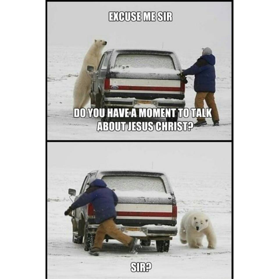 funny polar bear memes