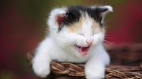 صور قطط مضحكة 2019 قطط مكتوب عليها نكت