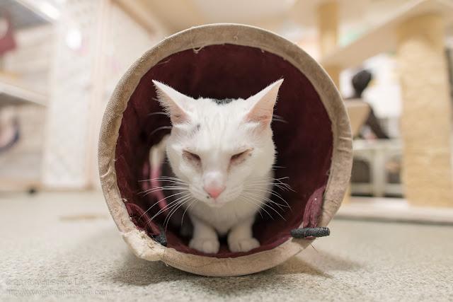 布製のトンネルから顔を出している猫を日の丸構図で写した写真