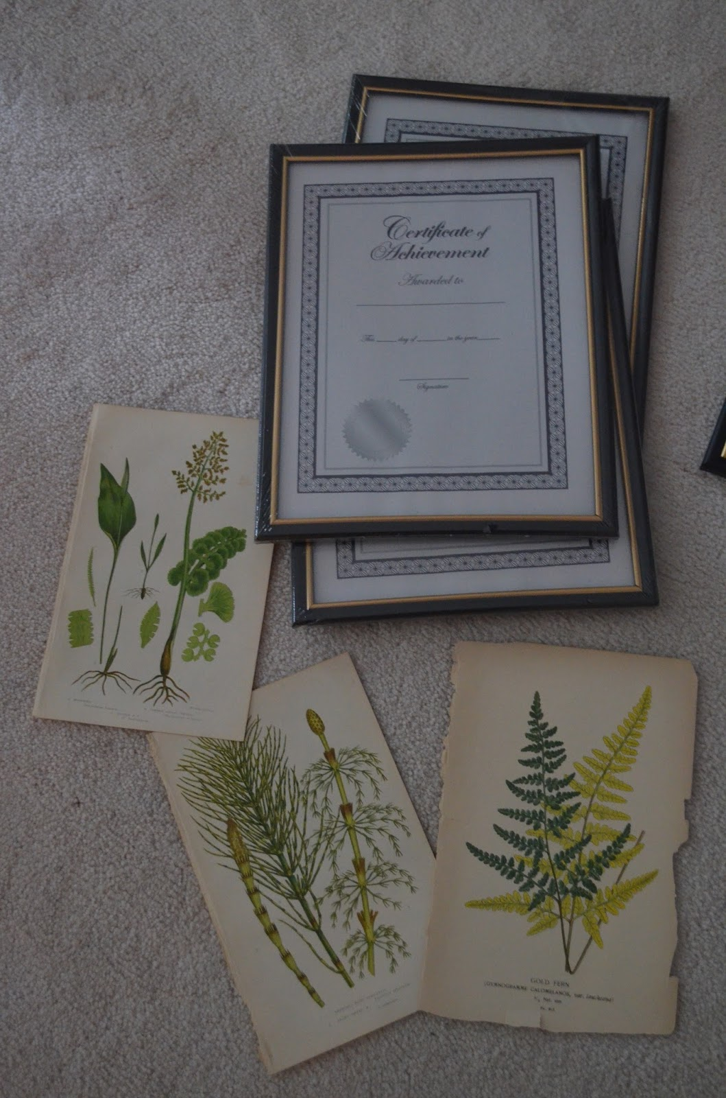 Bellissimo And Bella Antique Fern Prints A Recent Diy