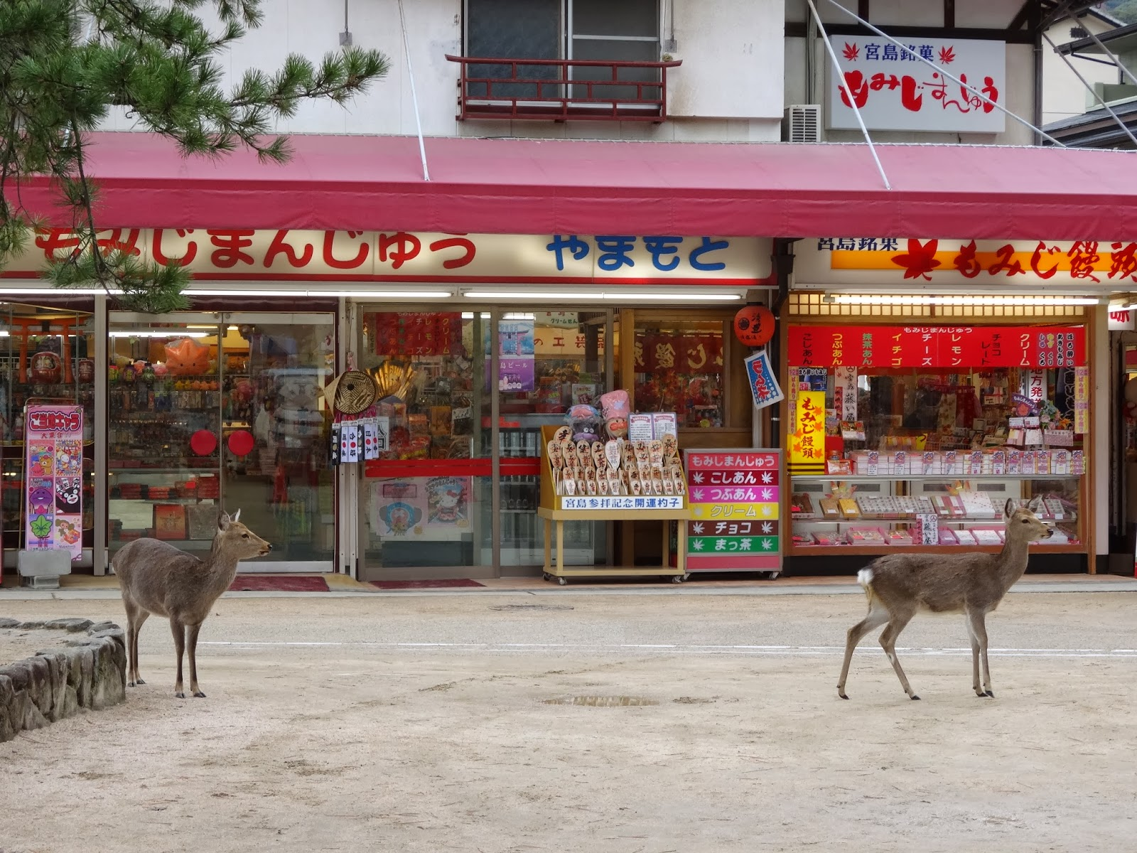 Deer in front of vibrant pink shopfront on Miyajima Island