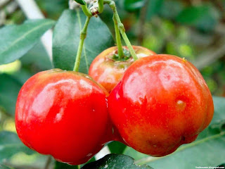 Acerola fruit images wallpaper
