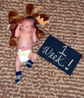 being mrs riley moose 1 week old our first week