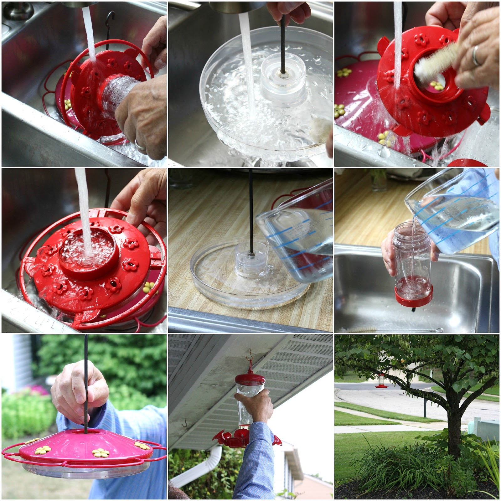 Maintenance of Your Feeder | Hummingbird Feeder Recipe And More For The Outdoorsy Homesteader