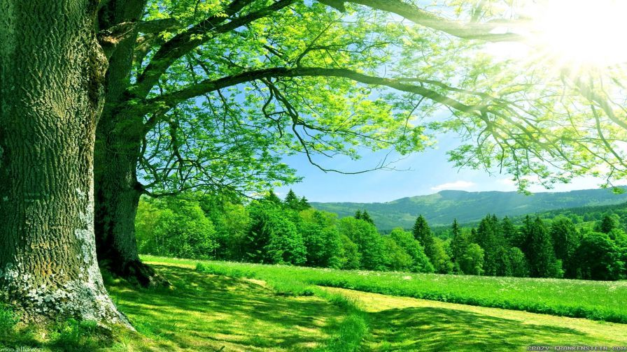 Nature Hd Images Collection