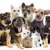 [pdf] Livro - Aspectos do manejo populacional de cães e gatos