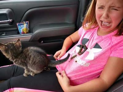 इन मजेदार तस्वीरों को देखने के बाद आप भी बिल्ली पालने से साफ़ इंकार करने पर मजबूर हो जायेंगे