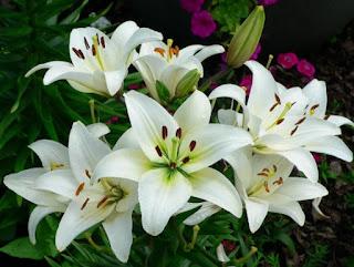 Toko bunga bekasi- toko bunga murah di bekasi- toko bunga di bekasi