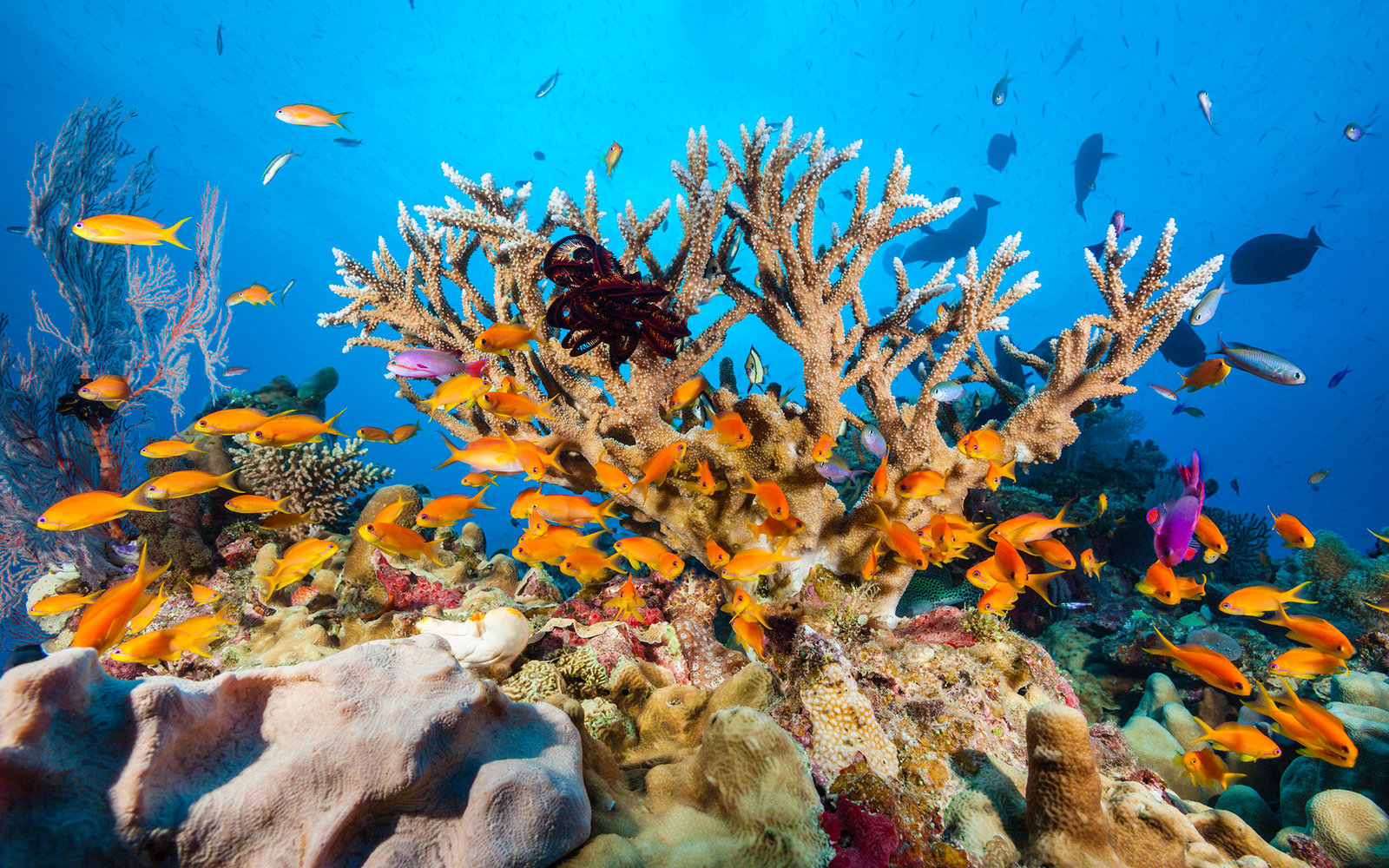 Coral reef | Earth Blog