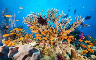 Coral reef 15