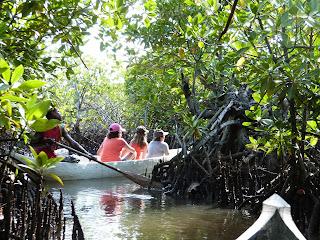 Photo mangrove Sainte-Marie Madagascar
