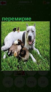 на траве лежат собака вместе с кошкой, у них перемирие наступило