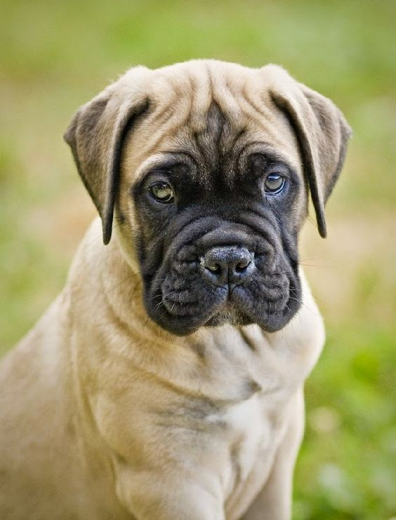 Top 5 Dog Breeds That Are Total Gentle Giants