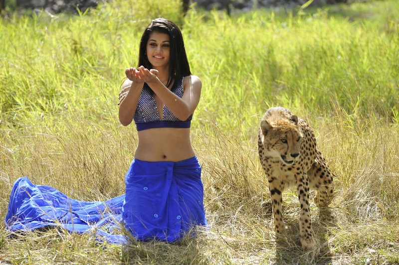 Indian Actress Photo Gallery  Tapsee Hot Navel Show-3620