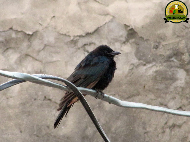 http://rakeshkirachanay.blogspot.com/2018/01/45-photography-bird-45.html